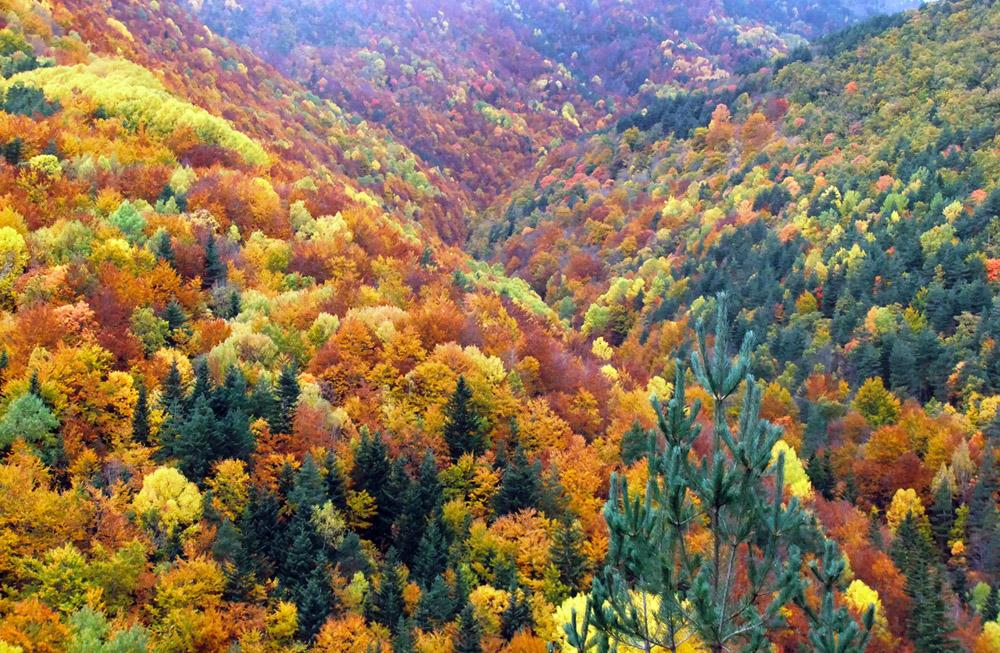 Bosque Fanlo-Sarvisé (Huesca, Pirineo Aragonés) Ordesa. 100 años de Ordesa y Monte perdido