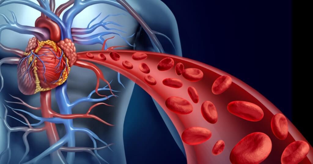 Remedios naturales para estimular la circulación sanguínea   HCH.TV