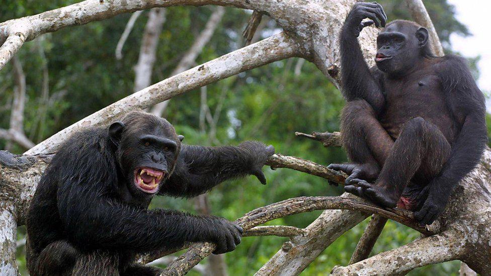 Hombre muere a manos de ¡monos!; le lanzaron ladrillos