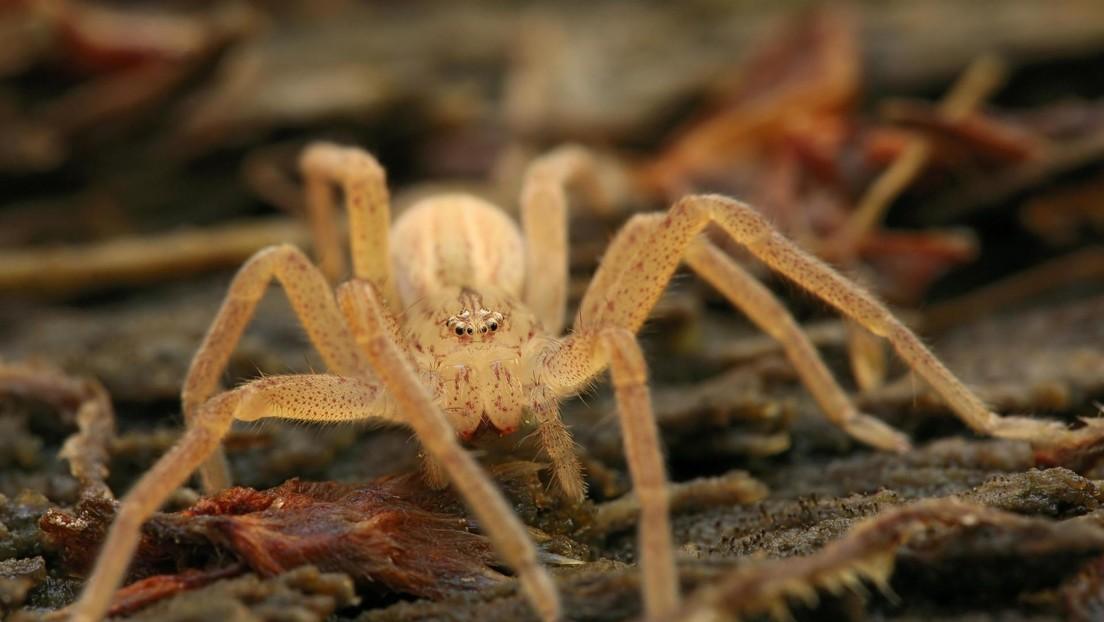 Más de 100 arañas invadieron la habitación de una nena — De terror